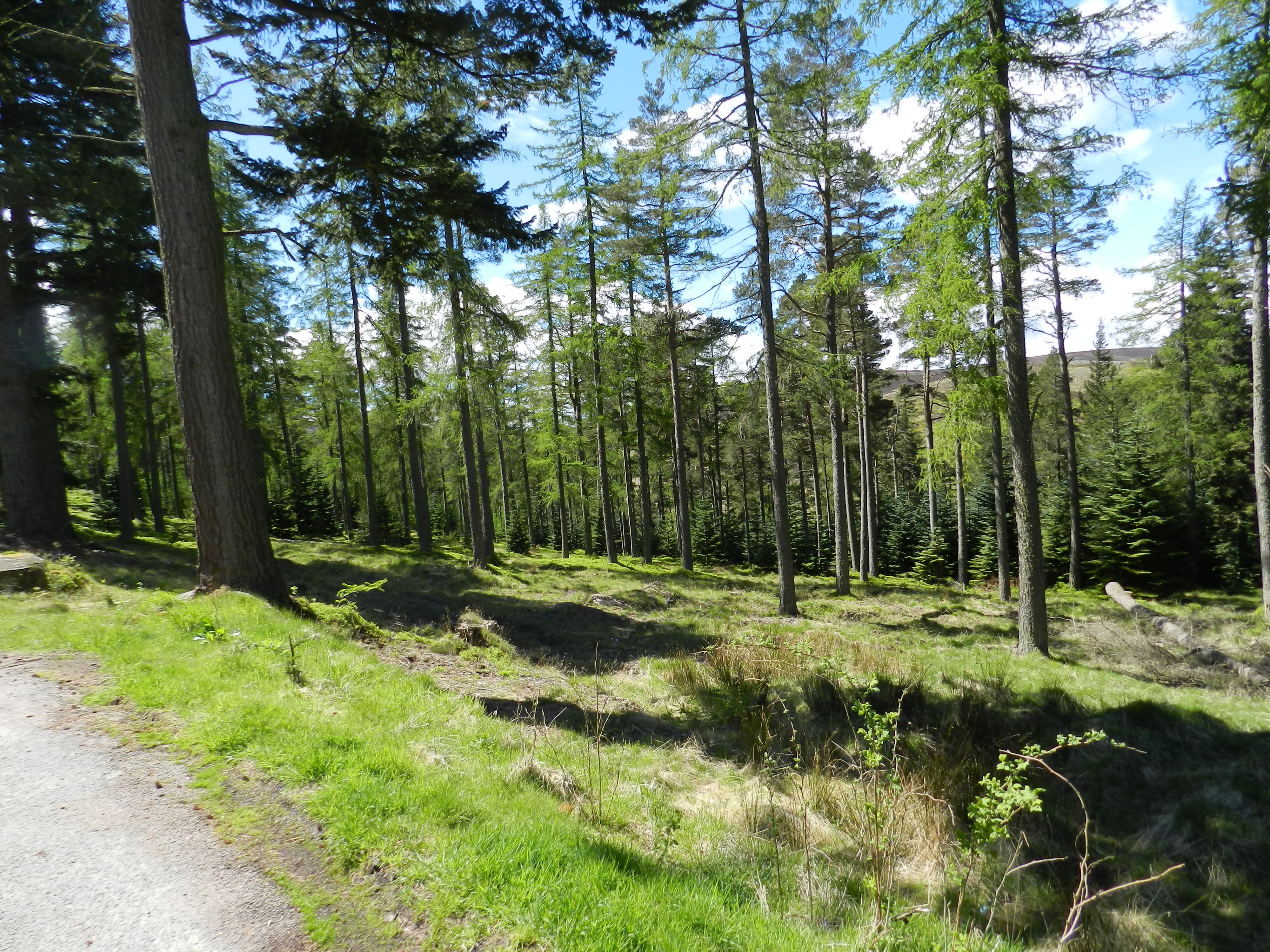 Road Trip to Strachan - May 2015 039