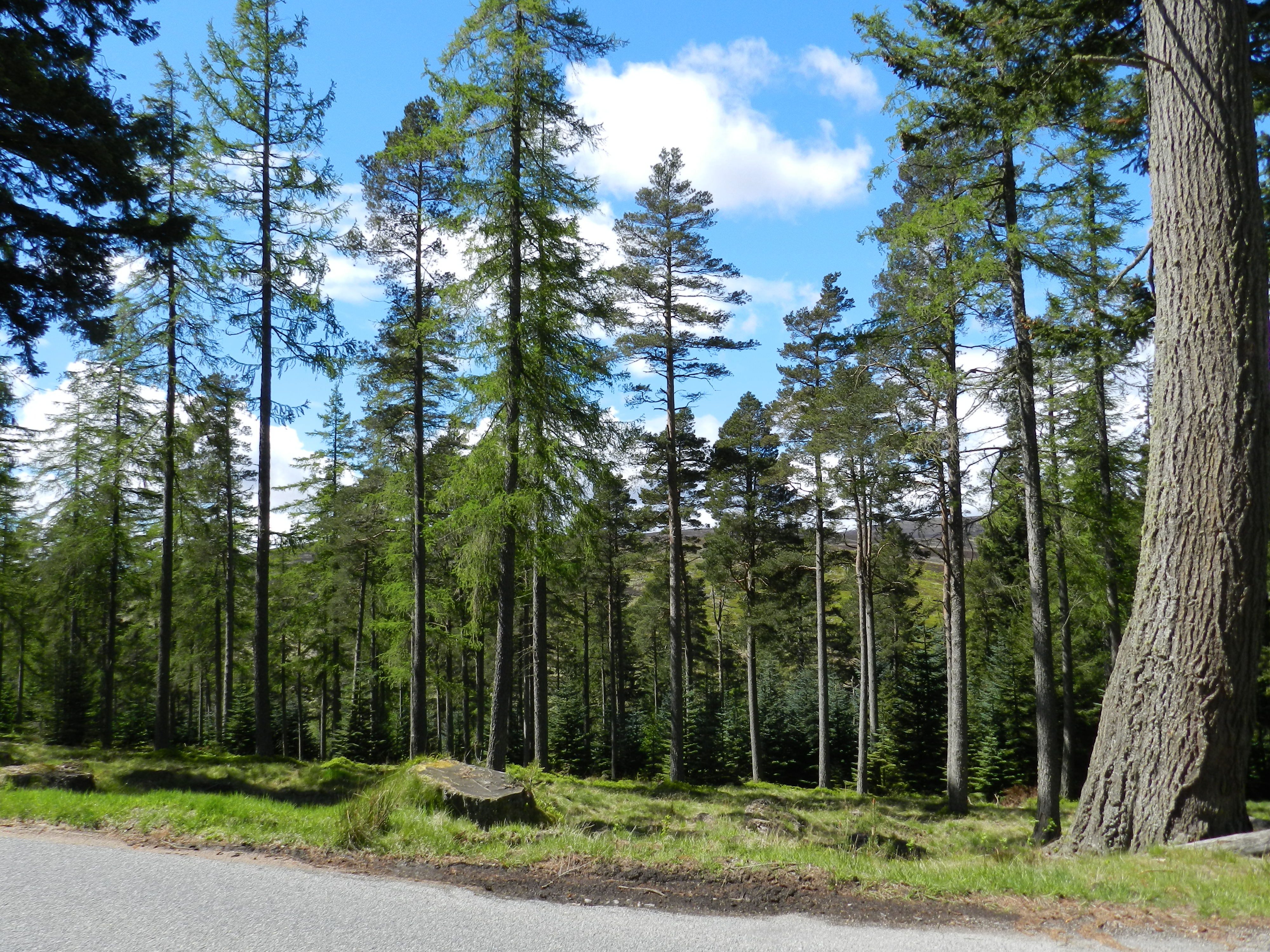 Road Trip to Strachan - May 2015 046
