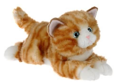 grimes cat