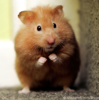 George the hamster