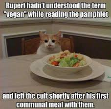 veggy cat 2