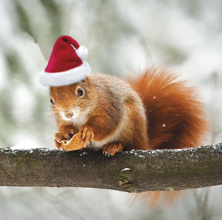 Christmas-Squirrel