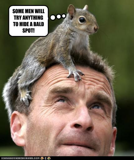 funny-pictures-squirrel-is-on-head